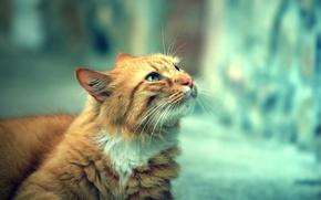 Wallpaper cat, look, street, day, looks, cat