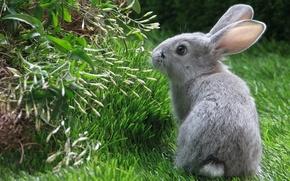 Picture summer, grass, rabbit