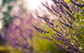 Picture field, flowers, nature, blur, flowers, flowers
