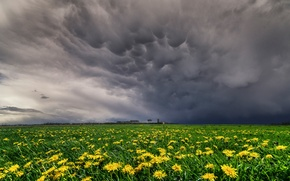 Picture flowers, meadows, yellow, videobritney clouds, Spring, field, dandelions, meadow, the sky, May