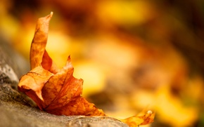 Wallpaper leaf, earth, autumn, yellow