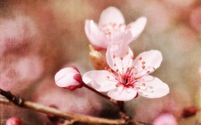 Picture style, background, spring, Apple