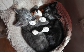 Picture toy, kittens, hugs