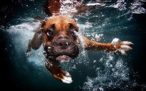 Picture bubbles, dog, under water, floats
