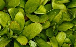 Wallpaper greens, grass, macro, sheet