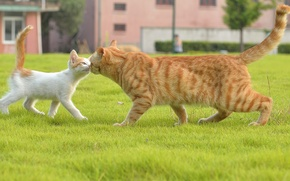 Picture cat, grass, meeting, kitty