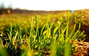 Picture field, the sky, the sun, macro, green, Grass, bokeh