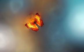Picture butterfly, Ƹ̵̡Ӝ̵̨̄Ʒ, Josep Sumalla, Golden Age