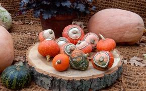 Picture autumn, flower, widescreen, harvest, pumpkin, pumpkin, exhibition, wallpaper, widescreen, background, the Wallpapers, full screen, HD …