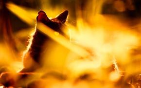 Picture cat, summer, grass, cat, light, nature, black, sunlight
