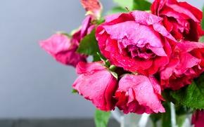 Picture macro, roses, bouquet