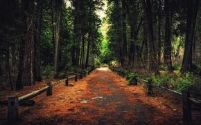 Picture forest, trees, nature, CA, track, Yosemite, path, California, Yosemite National Park