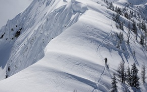 Picture snow, trees, mountains, traces, trails, tourist