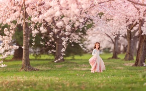 Picture spring, girl, flowering, Cherry blossoms