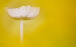 Picture macro, background, mushroom