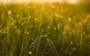 Picture grass, macro, Rosa, bokeh