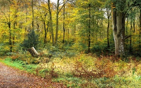 Picture autumn, forest, trees, path
