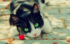 Wallpaper eyes, cat, cherry, green, black and white