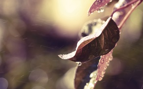 Wallpaper autumn, leaves, water, drops, macro, nature, rain, color, branch