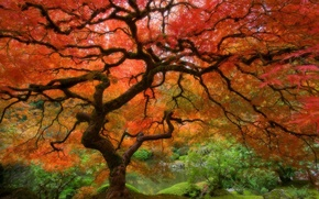 Wallpaper Tree, autumn, red, leaves
