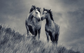Picture love, grass, field, horses, couple