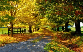 Picture road, autumn, leaves, trees, the fence, Nature, alley