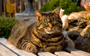 Picture cat, eyes, cat, green, shop, sitting, striped, bench