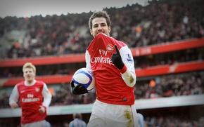 Picture Football, Arsenal, Fabregas, Fabregas, Football, Arsenal