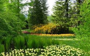 Picture greens, grass, trees, flowers, Park, Slovenia, Mozirski grove