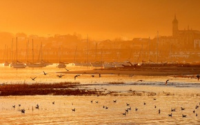 Picture birds, the city, Marina, yachts, morning, Spanish coast