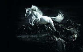 Wallpaper horse, wolf, twilight, white, wolves, Horse