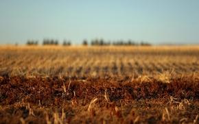 Wallpaper autumn, earth, Field