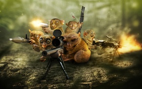 Picture weapons, background, sniper, defense, pygmy Lori