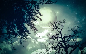 Picture stars, trees, night, branch, the moon