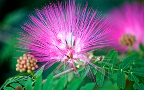 Picture flower, leaves, nature, exotic