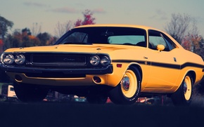 Picture yellow, Dodge, Challenger
