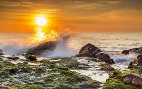 Picture sea, algae, wave, the sun, beach, stones, squirt