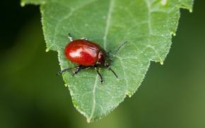 Picture nature, beetle, macro, bokeh, leaf, worm