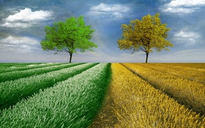 Picture field, trees, style, background