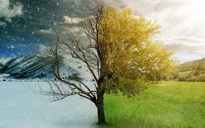 Picture winter, autumn, nature, seasons, beauty