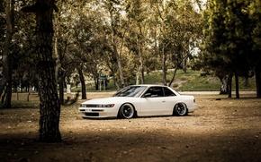 Picture trees, white, Silvia, Nissan, white, Nissan, Sylvia, S13