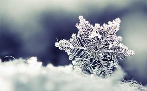 Picture winter, snow, Snowflake