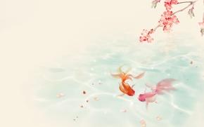 Picture water, pond, mood, branch, Sakura, goldfish