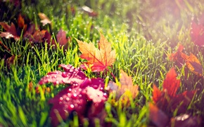 Picture autumn, leaves, morning, dew