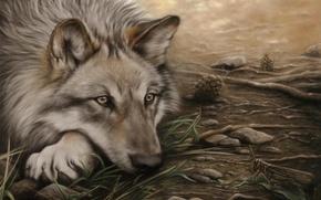 Wallpaper watching, lies, grasshopper, Wolf
