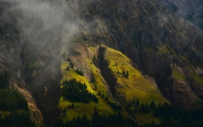 Picture forest, trees, mountain, slope
