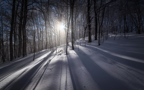 Picture winter, forest, light, snow, morning