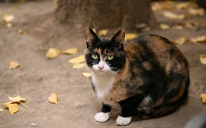 Picture autumn, cat, yellow leaves, black, red, sitting, looks