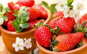 Wallpaper berries, strawberry, red, fresh, ripe, strawberry, berries