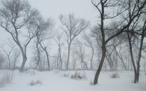 Picture winter, snow, trees, frost, Nature, Blizzard, blizzard, trees, winter, snow